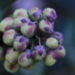 flower-buds-78108_1920